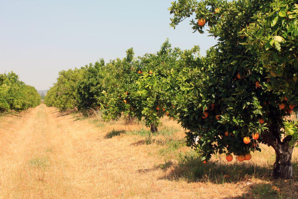 olefruits finca naranjos ecologicos